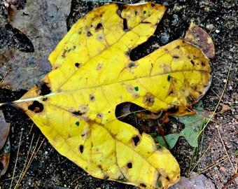 Yellow Autumn Leaf, Yellow Fall Print, Fall Decor, Leaf Photo, Leaf Art, Yellow Decor, Nature Photo, Yellow Leaf Print, Yellow Foliage