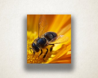 Flower and Bee Canvas Art, Bee Close Up Wall Art, Insect Canvas Print, Artistic Wall Art, Photograph, Canvas Print, Home Art, Wall Art