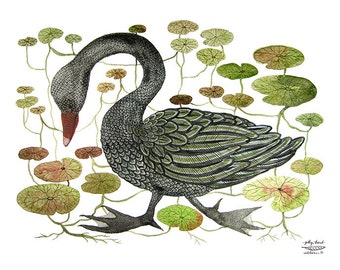 LARGE Black Swan and Water Lily Bog Print, swan illustration, bird art, giclee art print, watercolor print, wall art, 13 x 19