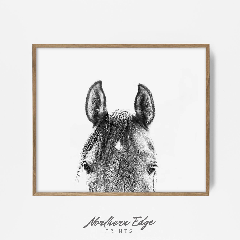 peekaboo horse bw horse print horse photo equestrian print
