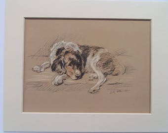 "English Setter dog print by Lucy Dawson dated 1935 in 10""x8"" mount ready to frame"