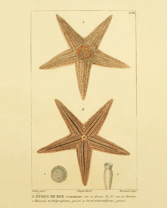 Starfish print vintage nautical art Ocean art Sea beach art