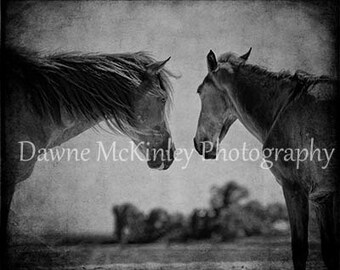 Wild Horses Black and White 8x10 Photograph Puerto Rico Horse  Home Decor Sale 90% Off