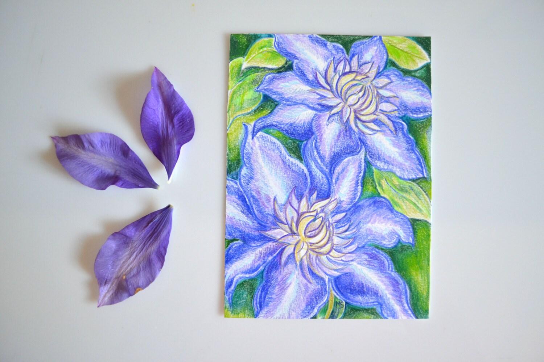 Purple Clematis Flower Original Color Pencil Drawing