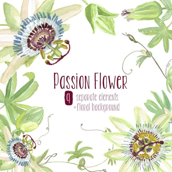 Watercolor Passion Flower Clip Art   Floral Elements, Tropical Flowers,  Romantic Wedding, Invitation Clipart From MartekArt On Etsy Studio