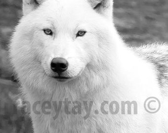Wolf Print Black and White Nature Photography White Wolf Print (Vertical)