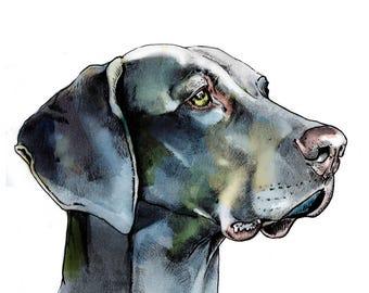 Weimaraner - Weimaraner Art - Weimaraner Print - Weimaraner Gift - Weimaraner Lover - Dog Lover Gift - Weimaraner Decor - Weimaraner Drawing