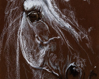 grey horse portrait, equine art, arabian horse, Original oil pastel drawing