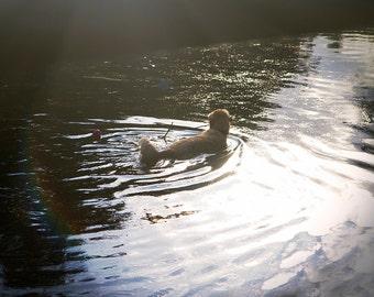 Peace and calm - Dog photography photo print