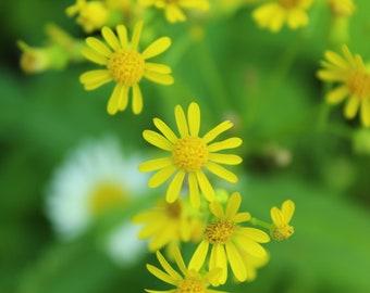 yellow flowers digital