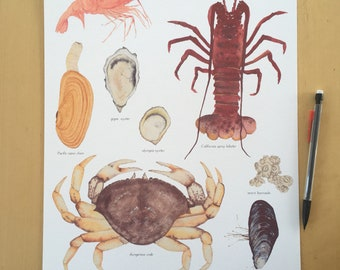 Shellfish of the Pacific