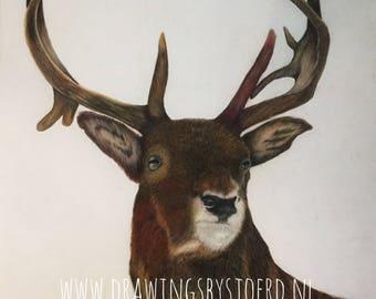 Deer Original Drawing