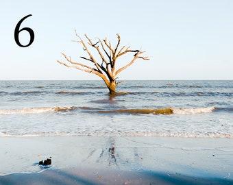 Standing Alone, Botany Bay at Edisto Beach