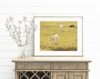 Calf photograph in color, Cow Photography, Baby Animal Art, Nature Photograph, Physical Print