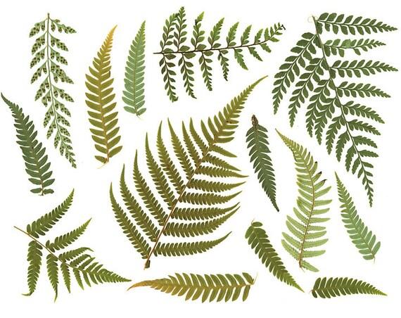clipart fern leaf digital resource digital rh etsy com fern plant clipart fern plant clipart