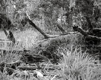 Fallen Tree In The Marsh, Black and White Photograph on Matte Paper, Fine Art