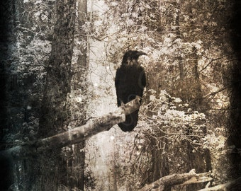 GOTHIC FOREST RAVEN Photo Gothic Grunge Surreal Raven Crow Tree Branch Art Print Halloween Black And White Sepia Forest Creepy Photography