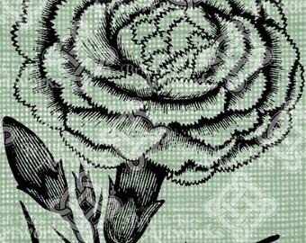 Digital Download Fancy Carnation image Antique Illustration, digi stamp, digital stamp, Elegant, and beautiful flowers