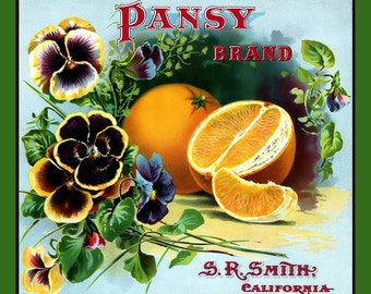 Pansy Oranges Refrigerator Magnet - FREE US SHIPPING