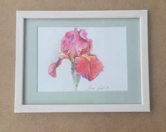 Red iris flower drawing colored pencil drawing framed