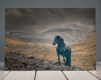 Black and Gold Icelandic Horse Print | Iceland Photography | Horse Photography | Equine Fine Art Print | Horse Interior Print | Home Decor
