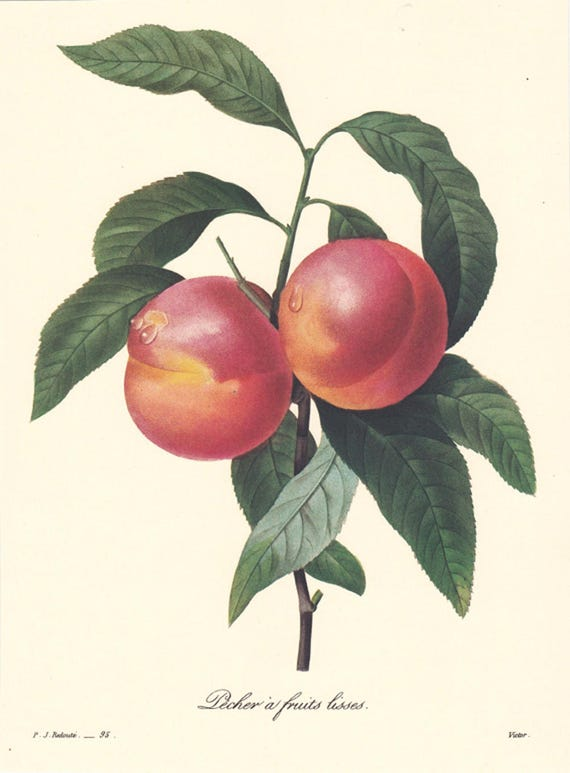Pecher a Fruits Lisse, peaches