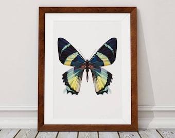 Butterfly Digital Download, Butterfly Digital Print, Butterfly, Digital Download, Digital Print