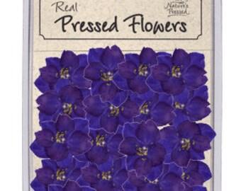 Purple Larkspur 100 Flowers
