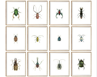 insect Taxidermy Art Print SET of 12. insect prints set, insect wall art, insect illustration, insect drawing, insect poster, insect chart