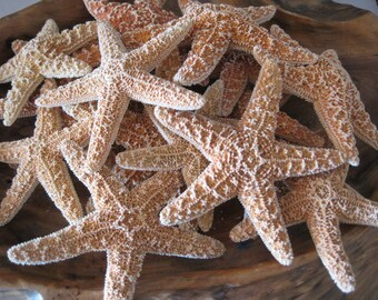 "Small Sugar Starfish 2 - 3"" (6 PC)  - Starfish - Seashells - Seashell Supply - Craft Seashells - Coastal Home Decor - Beach Decor"
