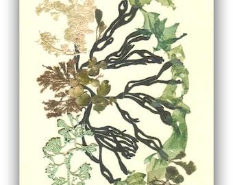 Seaweed art, Original collage seaweed pressing, Natural pressed seaweed, Botanical seaweed artwork, beach cottage decor