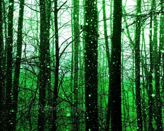 Emerald Green Trees, Surreal, Abstract, Spring, Nature Photograph, Landscape, Black Trees, Green, Snow - 8x10 inch Print -The Emerald Forest