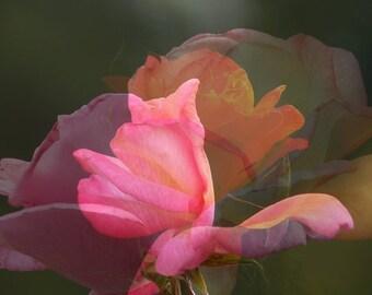 """Photo Art Paris """"Pink butterfly flight"""""""