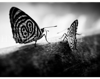 Black and White Butterfly Photography (Immediate Download)