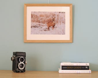 Photographic Art Print framed Roe deer in frost Nature