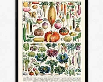 Vegetables Illustration Vintage Print 1 - Vegetables Poster - Vegetables Art - Kitchen Decor - Kitchen Art - Botanical Science - Larousse