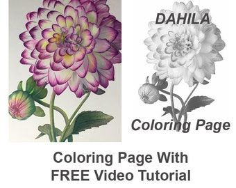 Dahlia Flower - Downloadable Coloring Page - With FREE YouTube Step By Step Tutorial - Prismacolor Pencils