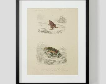 Vintage Amphibian Frog Reptile Plate 16