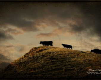 Grass is Greener on the Other Side  12x18 Fine Art Photo
