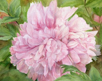 Pink Peony Floral Watercolor Original Painting Botanical Garden Flower Detailed Realism 8 x 10 inches