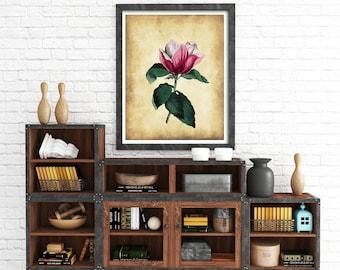 Magnolia print, Vintage flower print, Botanical print, Victorian flower print, vintage flower art, vintage wall art, victorian flower,