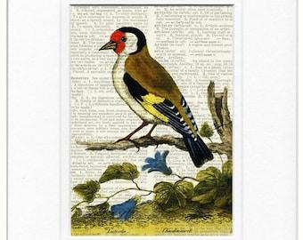 bird IV - 1700's bird print