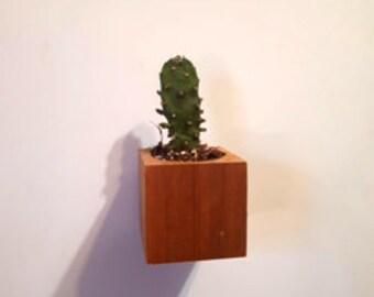 "Mini cactus - magnets for fridge Minibloks 1.5 ""-No.0.10"