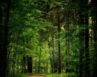 Emerald Green Woodland Print or Canvas Art, Forest, Oz, Green Woods, Trees Deep Green, Forest Art, Nature Print.