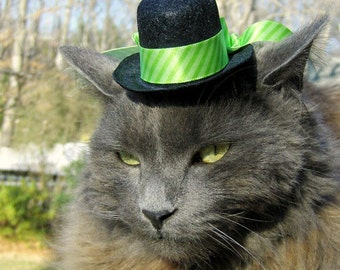 Cat Top Hat - Green, Bright Chartreuse Pet Hat - Spring Cat Hat - Saint Patrick's Day Hat
