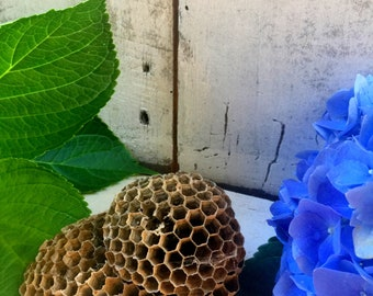 Wasp Nest, Small Wasp Nests,Natural Nest,Nests, Real Wasp Nest