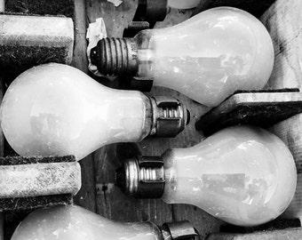 Colony bulbs...