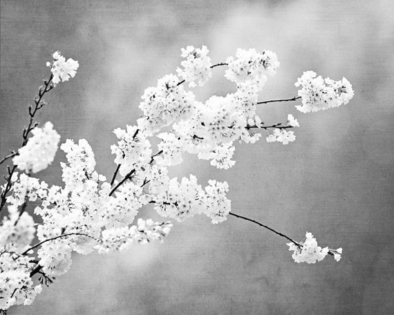 Grey photograph light black and white floral pale gray nature