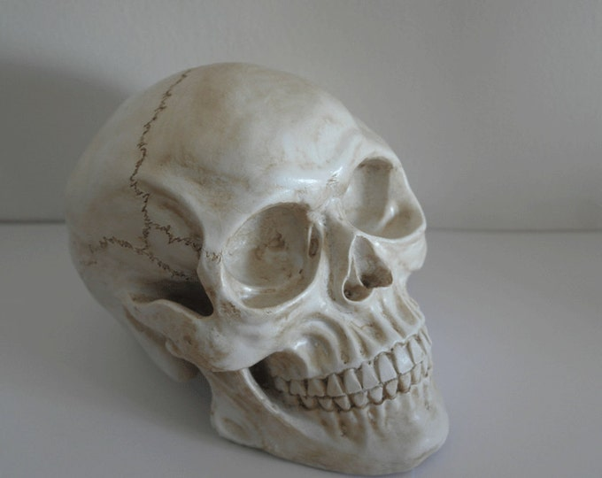 Anatomical Human Skull - Any Colour - Table Decoration, Faux Taxidermy Medical Skeleton Wedding Halloween Ghost Horror Psychobilly B Movie