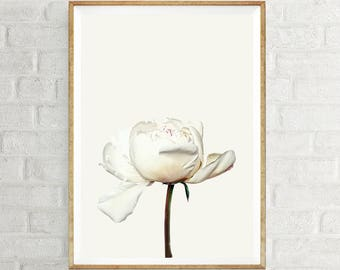 White Flower Art - Peony Contemporary Art,  Floral Wall Art,  Flower Photograph, Dorm Wall Art,  Printable Poster Art, Floral Art Print